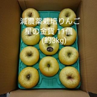 減農薬栽培りんご 星の金貨11個(約3kg)(フルーツ)