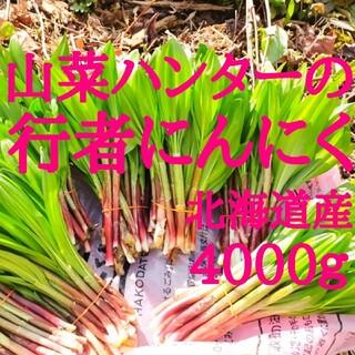 まさパパ様専用出品山菜ハンターが選んだ行者にんにく 北海道函館産 4000グラム(野菜)
