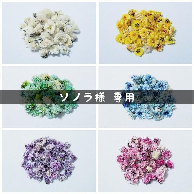 【ソノラ様専用】かすみ草のドライフラワー ハンドメイドのフラワー/ガーデン(ドライフラワー)の商品写真