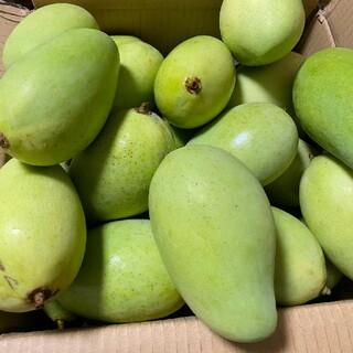 ベトナムグリーンマンゴー1kg約。唐辛子塩おまけ付け。すぐ発送(野菜)