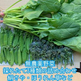 無農薬野菜*採れたて3種類の詰め合わせ*野菜セット*絹さや・ほうれん草など*(野菜)
