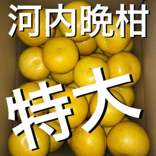 愛媛県産河内晩柑特大8キロ(フルーツ)