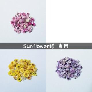 【Sunflower様専用】かすみ草のドライフラワー(ドライフラワー)