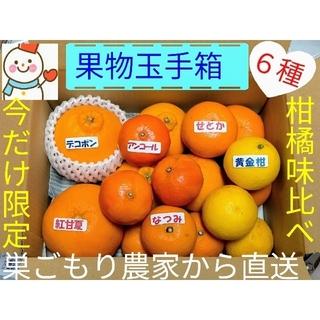 ラクマ価格で果物玉手箱♥今だけ❗珍しい高級柑橘の味比べ♥雪だるま直送(フルーツ)