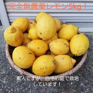 完全無農薬レモン5kg!化学薬品などいっさい不使用(フルーツ)