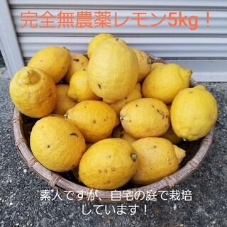 完全無農薬レモン5kg!化学薬品いっさい不使用(フルーツ)