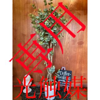 光触媒 人工観葉植物 ウォールグリーン 造花 インテリア ユーカリ128