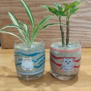 カラーサンド ネコ 観葉植物 おしゃれ(その他)