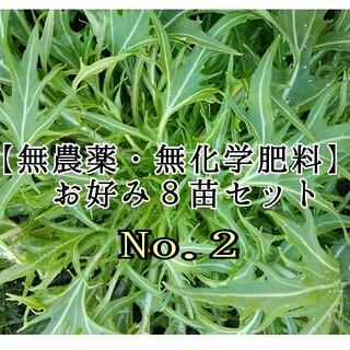 No.2【無農薬・無化学肥料】野菜とハーブ苗(野菜)