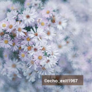 ペンタックス(PENTAX)の宝石の色選べます 宝石レンズ SMC Takumar 55mm f1.8(レンズ(単焦点))