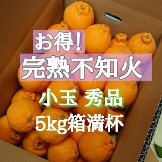 お得!完熟不知火 小玉秀品 5kg箱満杯(フルーツ)