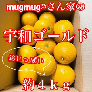 愛媛県産 河内晩柑(宇和ゴールド)約4kg《家庭用》(フルーツ)