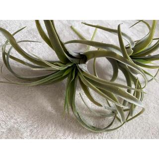 ニコアンド(niko and...)のフェイクグリーン 植物 ニコアンドniko and... (置物)