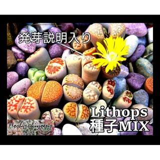 リトープス ミックス種子 35粒+a 発芽説明入り(その他)