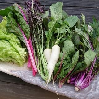 無農薬 野菜 朝どれ サラダセット 詰め合わせ(野菜)