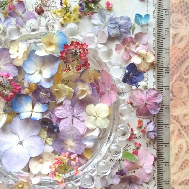 あじさい ドライフラワー 70輪以上 ハンドメイド アクセサリー レジン 小花  ハンドメイドのフラワー/ガーデン(ドライフラワー)の商品写真