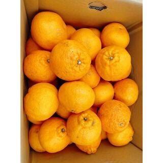 鹿児島県産 デコあま 2L 約10kg(フルーツ)