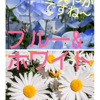 大容量 花の種♪ブルー&ホワイトの種セット(その他)