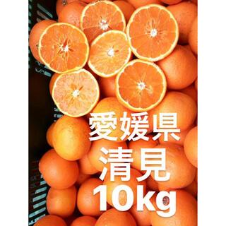 愛媛県 清見 10kg(フルーツ)
