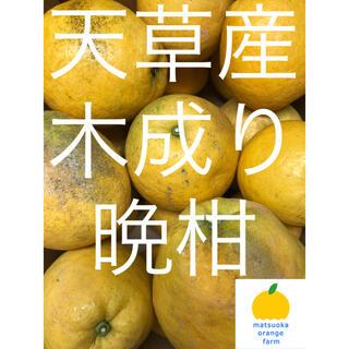 晩柑 家庭用 14kg (フルーツ)