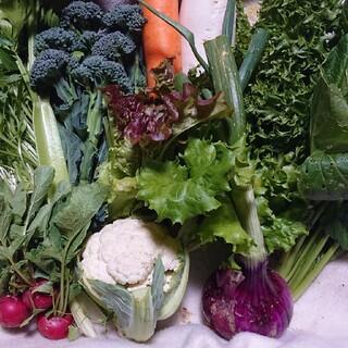 無農薬サラダ用野菜セット14品60サイズ満杯(野菜)