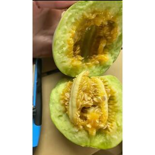 熊本県産 メロン 8〜11個入り 約4kg(フルーツ)