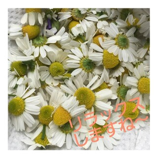 お花の種 リラックスハーブ♪ジャーマンカモミールの種(その他)