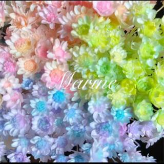 スターフラワーブロッサム マカロンカラー 80輪 ハーバリウム花材(ドライフラワー)