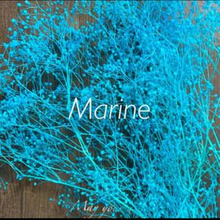 ソフトミニかすみ草 ターコイズブルー 10g ハーバリウム花材(プリザーブドフラワー)