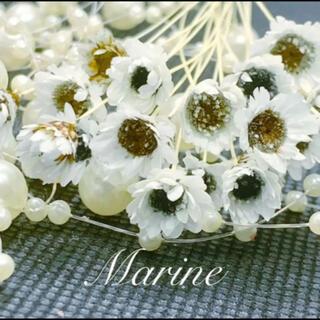 スターフラワーブロッサム アフリカンアイズカラー 80輪 ハーバリウム花材(ドライフラワー)