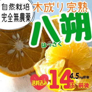 送料込み【無農薬】八朔 80サイズ箱(フルーツ)