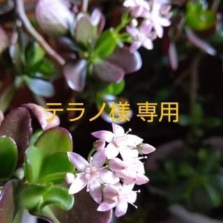 テラノ様 専用ページ(その他)