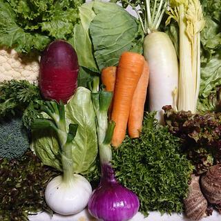 無農薬野菜セット 10品 80サイズ 満杯(野菜)