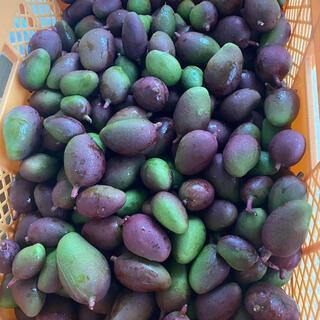 沖縄マンゴー1キロ、Okinawa mango 1kg(フルーツ)