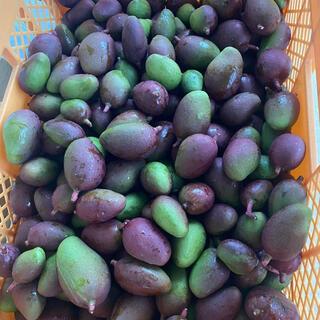 沖縄敵果マンゴー1キロ(フルーツ)