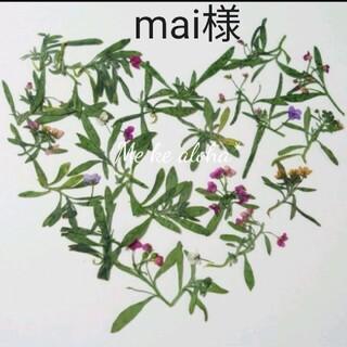 最安値【No.14】 アリッサムの葉っぱ +α 素材 押し花 ボタニカル 花材(ドライフラワー)