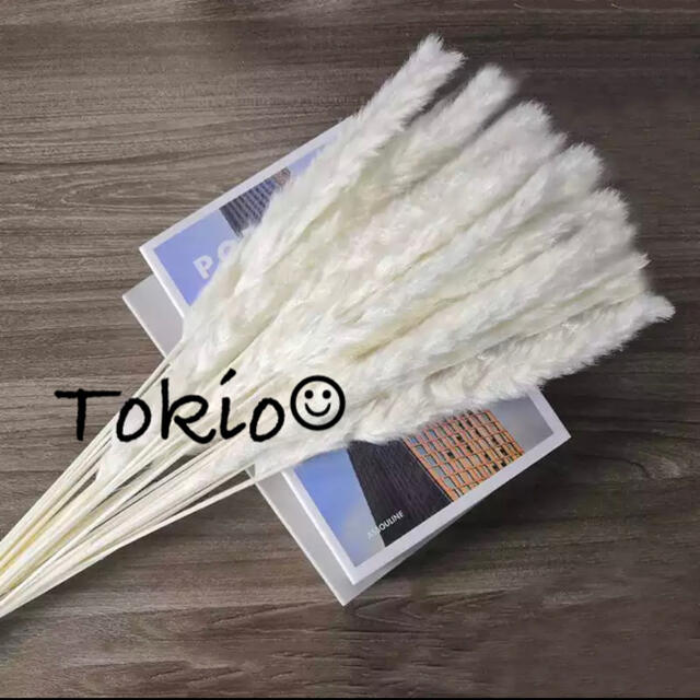 【数量限定】パンパスグラス テールリード 10本 白 アイボリー ハンドメイドのフラワー/ガーデン(ドライフラワー)の商品写真