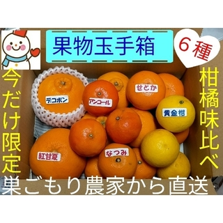 限定果物玉手箱♥今だけ❗珍しい高級柑橘の味比べ♥雪だるま直送(フルーツ)
