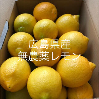 国産 レモン 広島県産 無農薬 レモン 瀬戸内レモン 2.5kg (フルーツ)