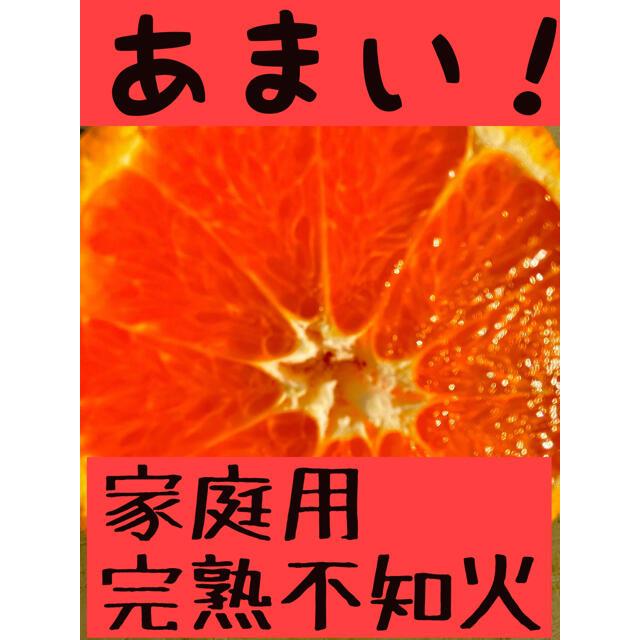 農家直送!愛媛県産不知火家庭用5kg 食品/飲料/酒の食品(フルーツ)の商品写真