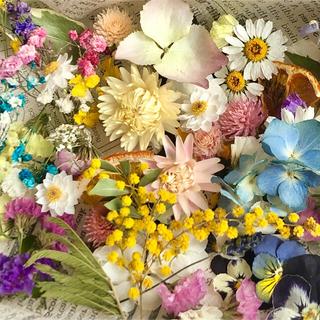 ドライフラワー花材セットNo.148⁑ビオラ❇︎ミモザ❇︎ かすみ草(ドライフラワー)