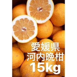 愛媛県 宇和ゴールド 河内晩柑 15kg(フルーツ)