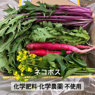 野菜詰め合わせ サラダセット(野菜)