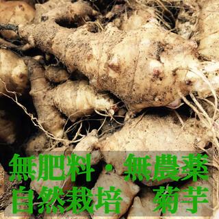 【1.5kg】無肥料 無農薬 菊芋 自然栽培 自然農 取れたけ 新鮮 種芋 健康(野菜)