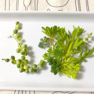 多肉植物☆斑入りグリーンネックレス&おまけセダム(その他)