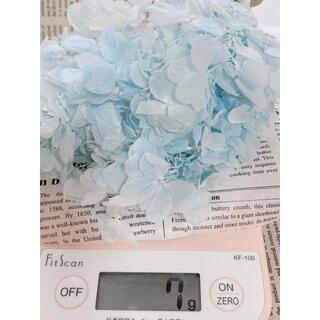 【花材】アジサイ ライトホワイトブルー(ドライフラワー)