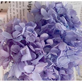 【花材】アジサイ ラベンダーパープル(プリザーブドフラワー)
