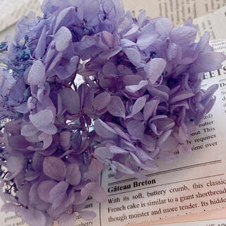 【花材】アジサイ ラベンダーパープル【№2】(プリザーブドフラワー)
