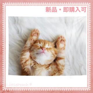 北欧インテリア 布ポスター ファブリックポスター 子猫01(その他)