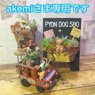 多肉植物 akemiさま専用オーダーページ(その他)